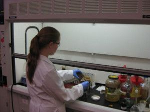 Kristen George applies crude oil to stone samples at NCPTT's laboratory facility in Natchitoches, LA.