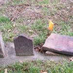 Portland Cement  Vs Historic Gravestones: