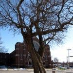 tree & church