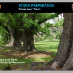 Trees: Storm Preparation and Recovery: How to protect trees and evaluate damage