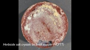 Herbicide salt crystals on a brick sample