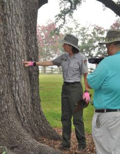 NPS Horticulturalist Bernadette Clooney discusses tree inspection during the filming of a training video in Bermuda, LA.