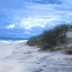 Climate Change at Assateague Island: Rising sea levels and violent storm events threaten Assateague Island
