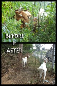 29. Before & After