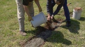 Burying Spanish Moss in a ditch for processing