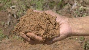 Choosing and gathering a silt soil