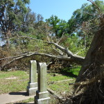 Tree down in cemetery after a windstorm.