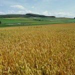 Plantations and Agriculture:
