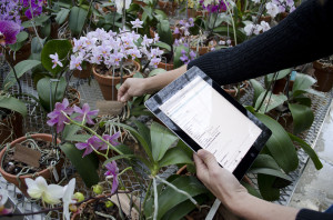 Collecting data using the Mobile Tools to inventory orchids at the Missouri Botanical Garden
