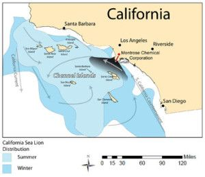 Fall 2011 coursework from Sharky's undergraduate class. Sea Lion Distribution in southern California relation to DDT + PCB outflow from the Montrose Chemical Corporation, as well as the California Currents. Photo From: https://en.wikipedia.org/wiki/File:Sea_Lion_Distribution.png