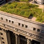chicago-city-hall-green-roo