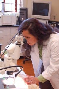 Dr. Carol Chin examines a treated limestone sample.