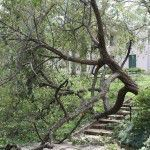 Hurricane Ike damage at Bayou Bend Gardens, 2008.