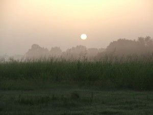 sunrise-on-cane-river