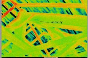 Dark areas indicate moisture in roof. The darker areas indicate higher concentrations of moisture, damage and activity.